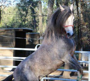 horse-943008_1920